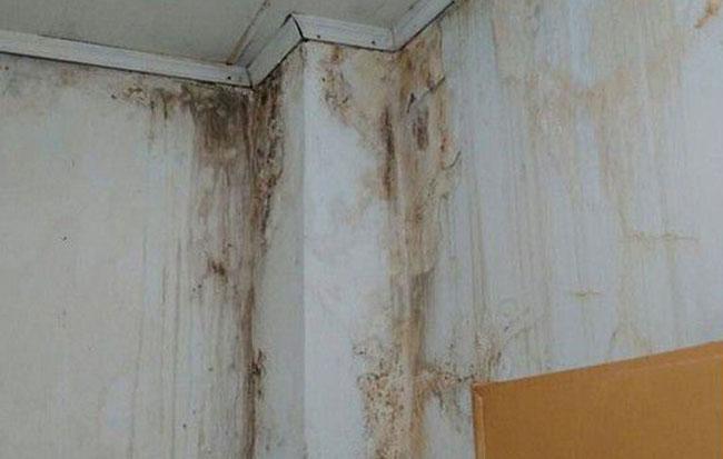 Nguyên nhân bị thấm nhà làm cho nhà bị ẩm mốc